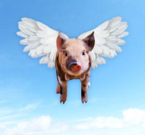pigs-1520968_1280
